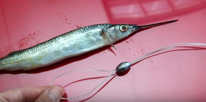 Kingfish – TOPCATCH